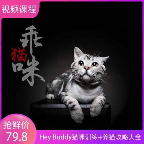 Hey Buddy猫咪训练 养猫攻略大全 视频课程+资料(完整版)